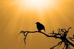 bird-313614_640