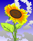 sunflower-23909_960_720
