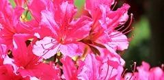 flowers-1387526__340
